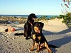 Jacksonville Beach Pet Friendly Resorts
